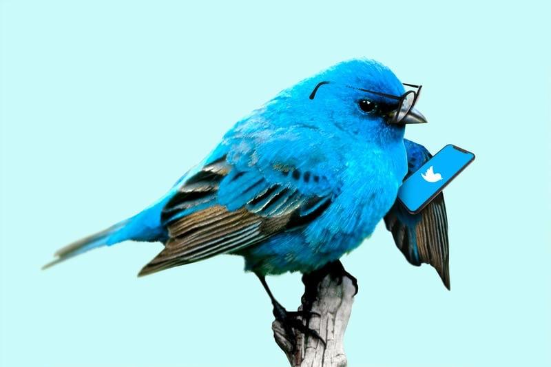 ツイッター Twitter 大学生 暇つぶし